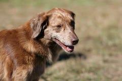 Cão feliz bonito Foto de Stock Royalty Free