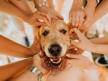 cão feliz do golden retriever com mão do manr no seu Parque no fundo imagem de stock