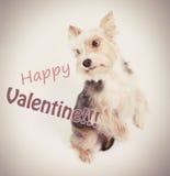Cão feliz do Valentim Imagem de Stock