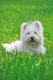 Cão feliz em um parque Foto de Stock Royalty Free