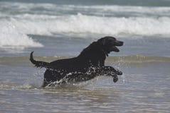 Cão feliz na água Imagens de Stock