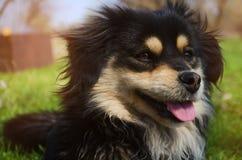 Cão feliz na grama Foto de Stock Royalty Free