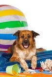 Cão feliz no beira-mar Imagens de Stock