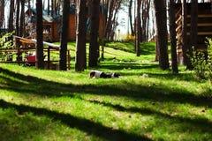 Cão feliz que encontra-se na grama verde Imagens de Stock Royalty Free