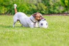 Cão feliz que joga fora, Fotografia de Stock