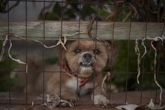 Cão festivo Fotos de Stock