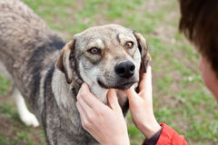 Cão fiel Foto de Stock Royalty Free
