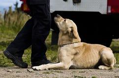 Cão fiel Imagens de Stock