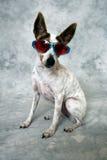 Cão fresco fotos de stock