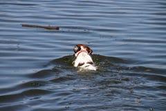 Cão fresco Foto de Stock Royalty Free