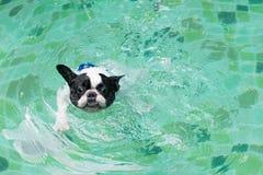 Cão fresco Imagem de Stock