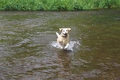 Cão fresco Fotografia de Stock
