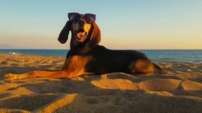 Cão fresco com os óculos de sol que relaxam na praia filme