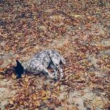 Cão frio imagens de stock