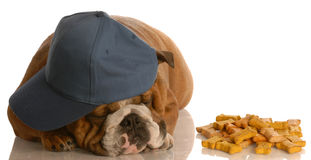 Cão furado Imagem de Stock