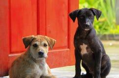 Cão gêmeo Imagem de Stock