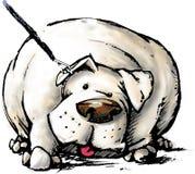 Cão gordo Imagens de Stock Royalty Free
