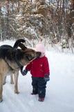 Cão grande de Multibred que lambe a menina Fotografia de Stock