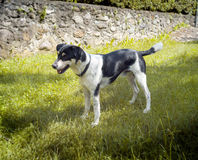Cão Imagem da cor Fotografia de Stock Royalty Free