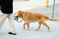 Cão independente Fotografia de Stock