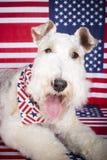 Cão independente Imagem de Stock Royalty Free