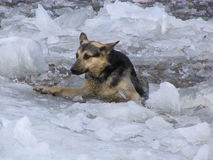 Cão infeliz Fotografia de Stock