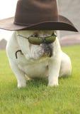 Cão inglês de Bull com chapéu e óculos de sol Fotos de Stock