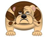 Cão inglês de Bull isolado no branco ilustração royalty free