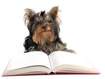 Cão inteligente Foto de Stock