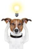 Cão inteligente esperto foto de stock