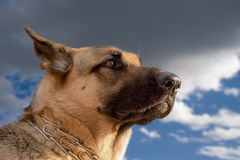 Cão interest-3 Fotos de Stock