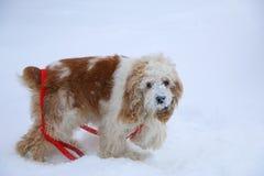 Cão invernal Foto de Stock Royalty Free