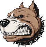 Cão irritado Imagens de Stock Royalty Free