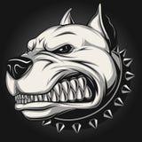 Cão irritado Imagens de Stock