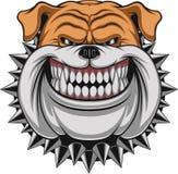 Cão irritado Foto de Stock