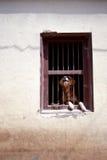 Cão irritado atrás da barra Fotos de Stock Royalty Free