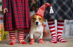 Cão Jack Russell Terrier e pés mulher e menina no vermelho imagens de stock