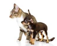Cão junto com um olhar do gato de lado. fotografia de stock