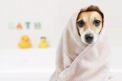 Cão lavado banho Imagens de Stock Royalty Free