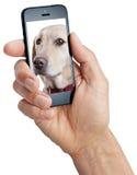 Cão móvel do telefone celular fotos de stock royalty free