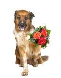 Cão adorável que oferece um posy das flores imagens de stock royalty free