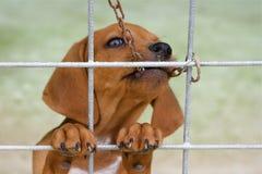 Cão marrom pequeno fotografia de stock