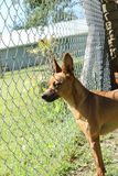 Cão marrom pequeno bonito em sua jarda fotografia de stock royalty free