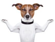 Cão Meditating Fotografia de Stock Royalty Free