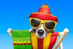 Cão mexicano fotografia de stock