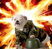 Cão militar Imagens de Stock Royalty Free