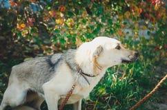 Cão misturado da raça imagem de stock royalty free