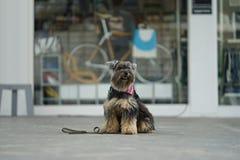 Cão misturado pequeno da cor do preto da raça que senta-se no assoalho Fotos de Stock Royalty Free