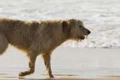 Cão molhado imagens de stock