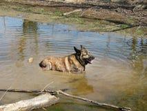 Cão molhado desarrumado sujo sujo Foto de Stock